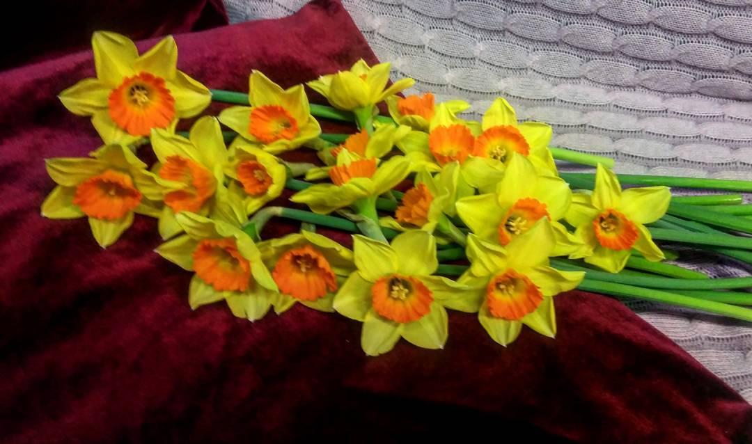 Создаем весну???? Нарциссы в наличии???????????????? Ул. Ветошникова д.131. ☎(347)266-59-77 ????+7 927 236 59 77. Сайт www.bloomboom.ru#flowers#доставкацветовуфа#цветыуфа#цветы#уфа